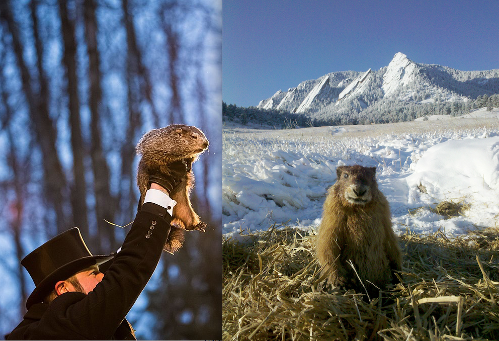 In this cross-country battle of slight seers, which rodent reigns supreme?